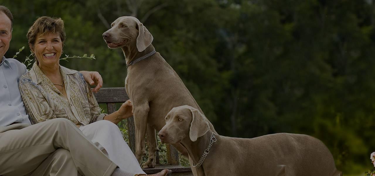 Les propriétaires et leurs chiens, hôtel de charme auvergne, Château d'Ygrande