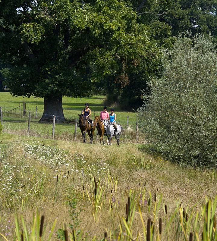 Balade à cheval, cours stages centre équestre auvergne, Château d'Ygrande.