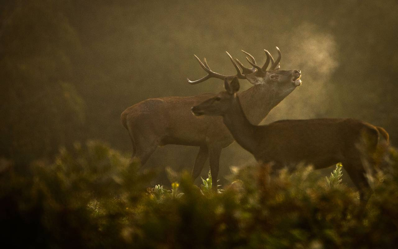 Deers, discovery stay auvergne allier, Château d'Ygrande