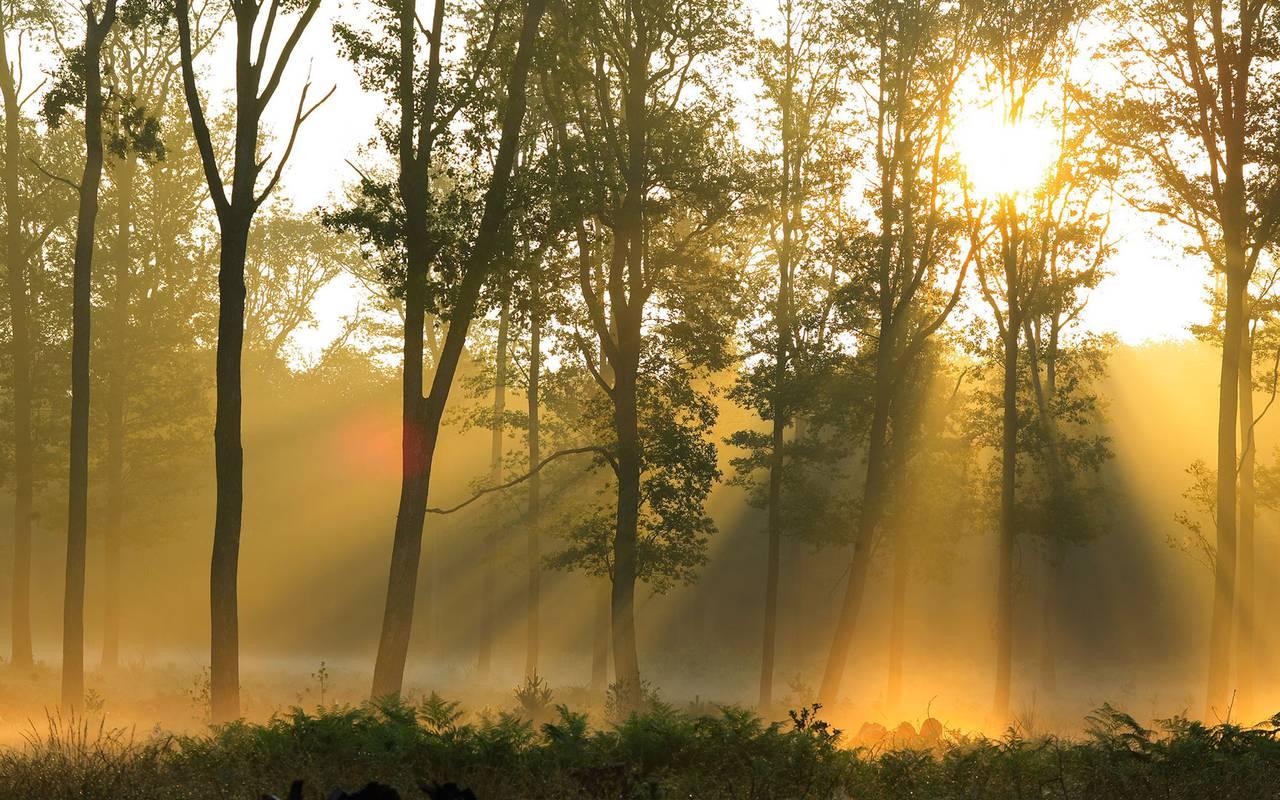 Magnifique forêt, séjour découverte campagne bourbonnaise, Château d'Ygrande