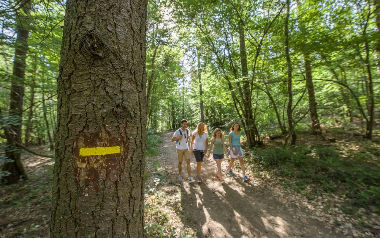 Forest walk, auvergne stay, Château d'Ygrande