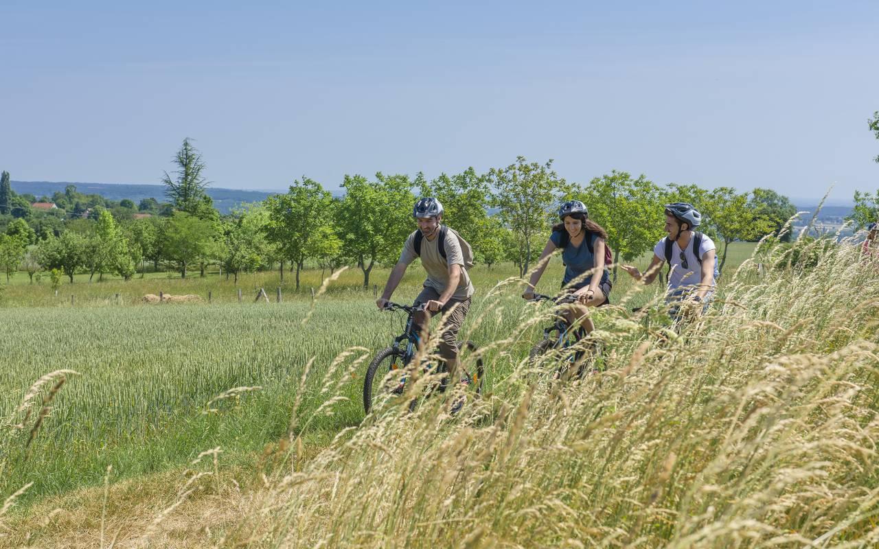 Field walk, discovery stay auvergne allier, Château d'Ygrande