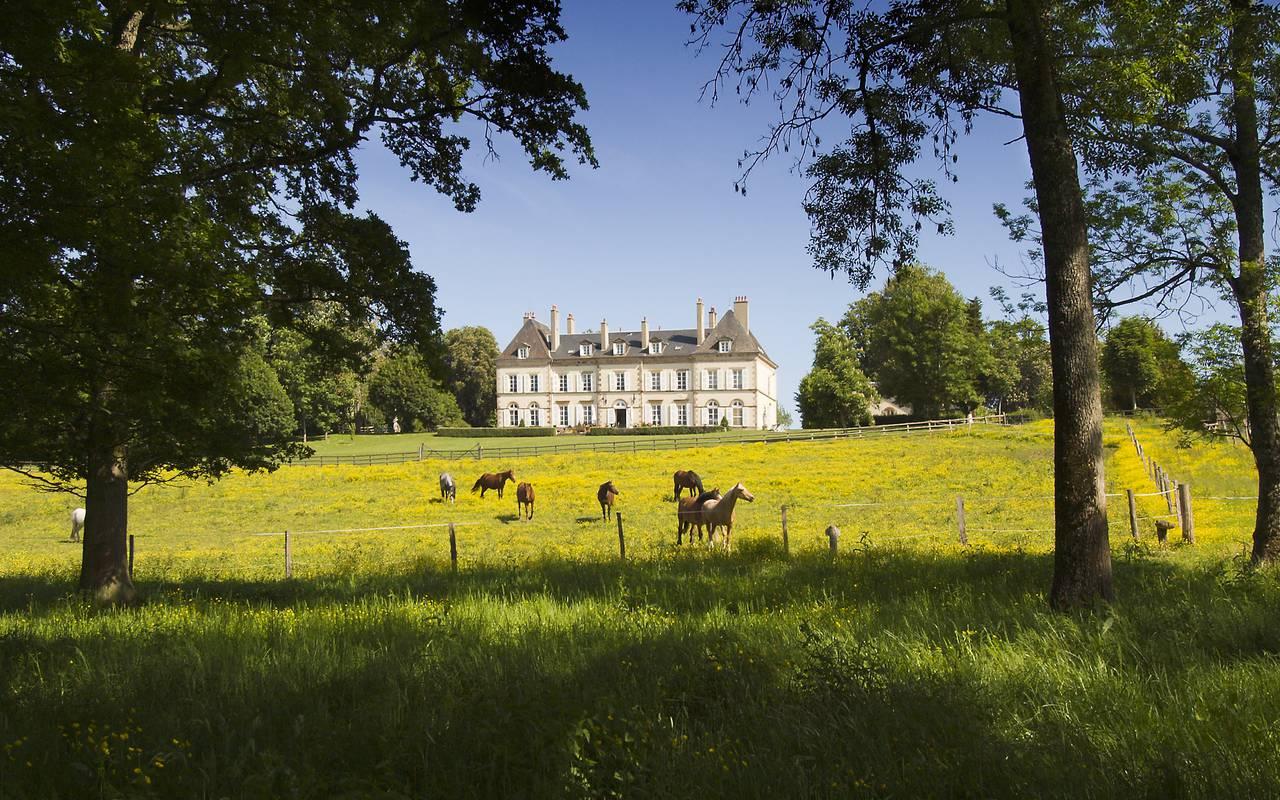 Jardin avec chevaux et château, séjour prestige, Château d'Ygrande.